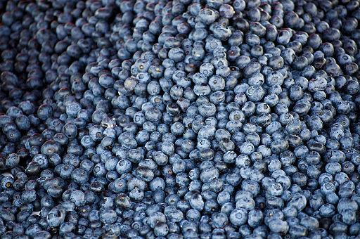 Tonnevis med blåbær. Desse er frå Finland. Foto: CGP Grey/ Wikimedia Commons